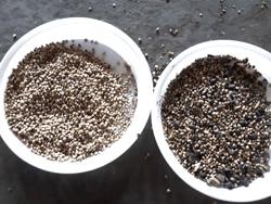 Фотосепарация семян конопли